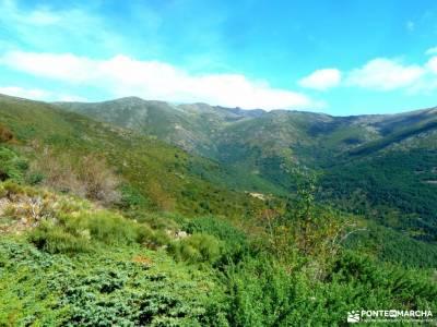 Hayedo Montejo-Cuerda Pinilla; vacaciones senderismo actividades madrid